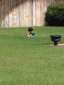 jack in the grass